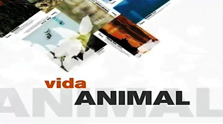 Vida Animal em Portugal e no Mundo