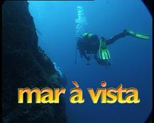 MAR � VISTA Caulerpa webbiana
